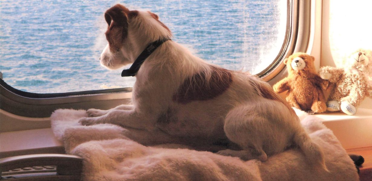 Brittany Ferry Pets and their owners can travel with confidence in 2020