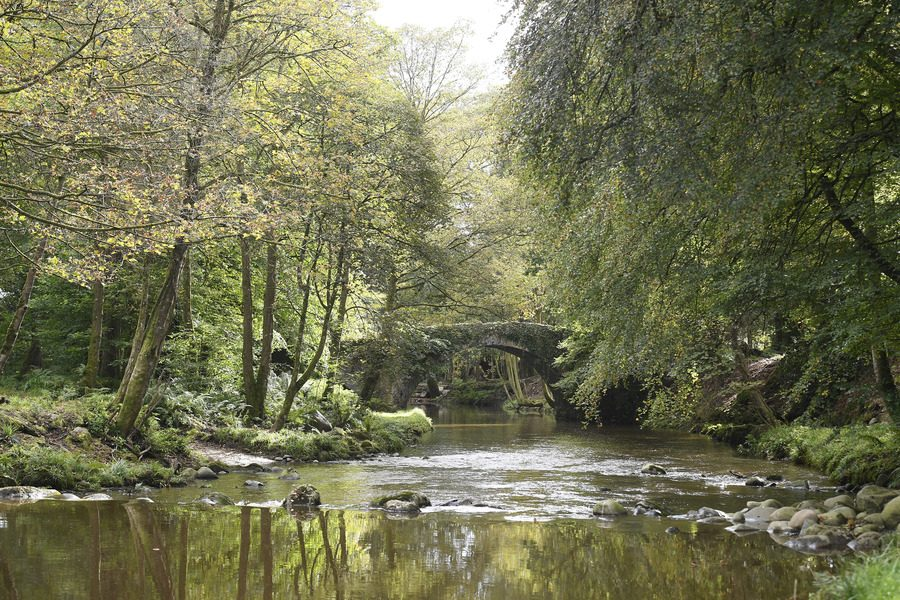 Woodland Trust Northern Ireland buys ancient woodland in Kingdom of Mourne